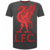 Liverpool T-shirt Liverbird Grå XS
