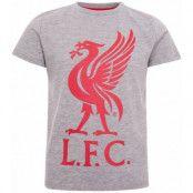 Liverpool T-shirt LIVERBIRD Junior Grå 3-4 år